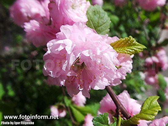 Весенний Кировоград в фотографиях, Фото Игоря Филипенко