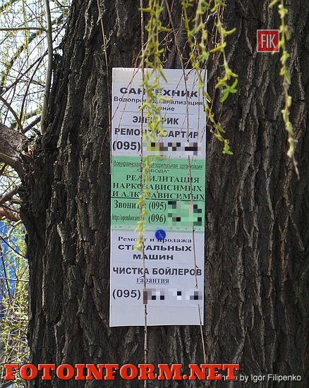 В Кировограде появилась прибитая гвоздями к деревьям реклама (ФОТО)