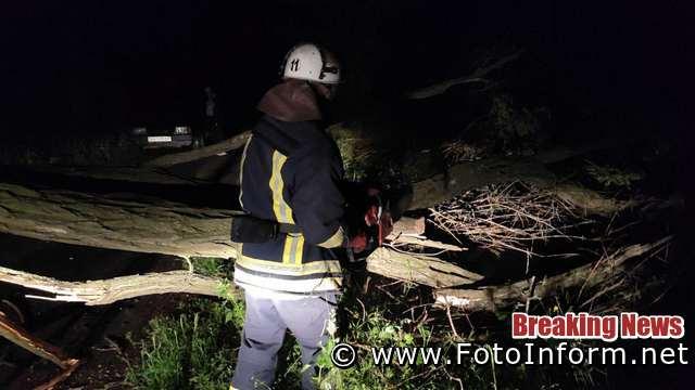 29 травня о 21:24 до Служби порятунку «101» надійшло повідомлення про те, що по вул. Героїв Сталінграду у м. Олександрія дерево впало та перегородило проїжджу частину дороги.