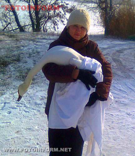На Кіровоградщині небайдужі люди і рятувальники допомогли скаліченому лебедю (ФОТО)