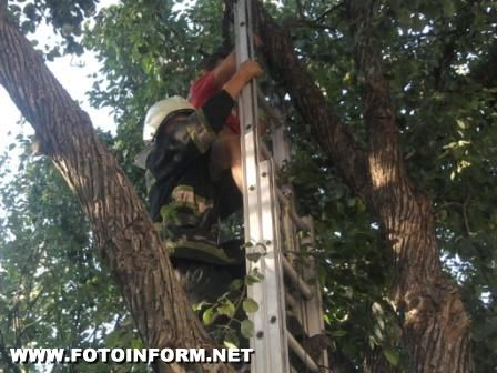 Кіровоградця зняли з дерева (ФОТО)