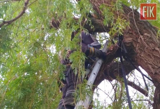 Кіровоградщина: на дереві застряв 12-річний підліток