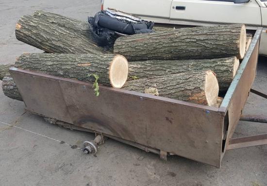 На Кіровоградщині припинили незаконну діяльність осіб, які спиляли понад півсотні дерев