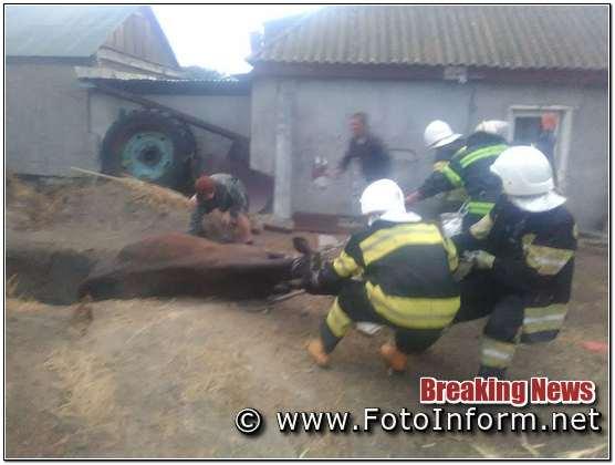 29 червня о 19:57 до Служби порятунку «101» надійшло повідомлення про те, що потрібна допомога по вилученню корови, що впала у вигрібну яму.