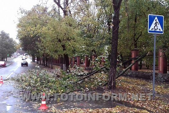 Впродовж доби 13 жовтня до Служби порятунку «101» надійшло п'ять звернень від громадян та комунальних служб з проханням прибрати повалені дерева або гілки.