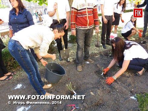 Сегодня, 20 сентября, на центральной площади нашего города кировоградцы высадили кусты роз.