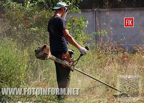 Кировоград: на Балашовке началась борьба с амброзией (ВИДЕО)