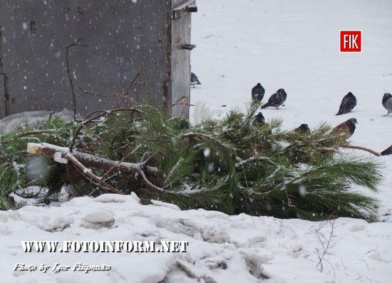 Кропивницький: неприбране сміття засипає снігом