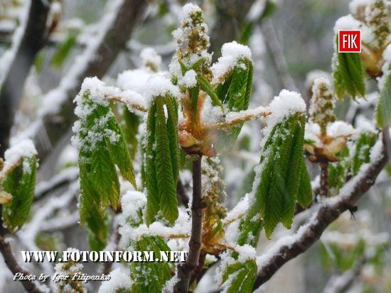 У Кропивницькому сніг накрив розквітлі дерева