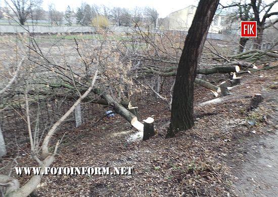Сьогодні, 4 грудня, у центрі Кропивницького по вул. Велика Пермська було знищено біля десяти дерев.