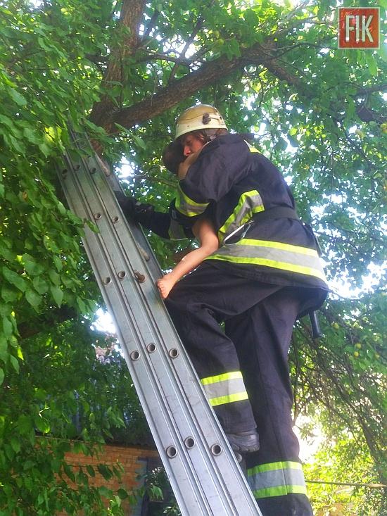 На Кіровоградщині рятувальники зняли малюка з дерева