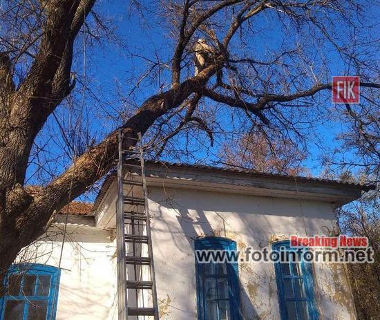 На Кіровоградщині, аварійне дерево, загрожувало будівлі музею (ФОТО)