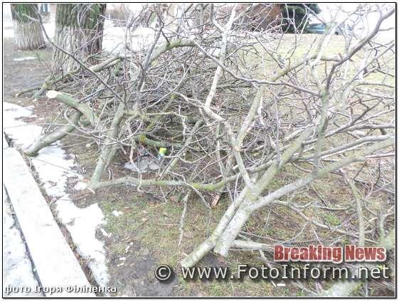 кропивницкий, обрезка дерев, гілки обрізанні