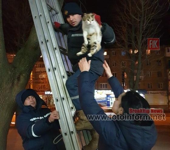 Кропивницькому, рятувальники, зняли кота з дерева