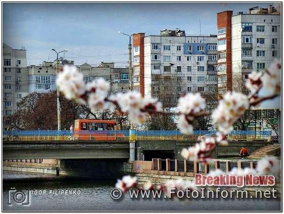 Кропивницкий, город, зацвели деревья, абрикосы цветут, кропивницкий новости, фото филипенко,фотоинформ
