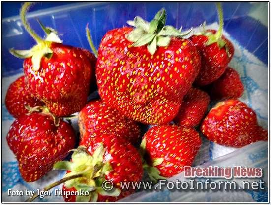 У Кропивницькому може здорожчати полуниця