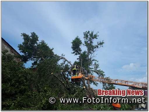дерево впало на покрівлю житлового будинку