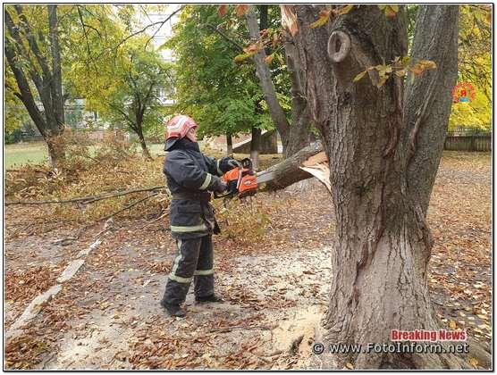 Кропивницькому двічі розпилювали та прибирали аварійні дерева