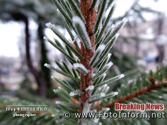 У Кропивницькому дерева вкрив іній, фото Ігоря Філіпенка,