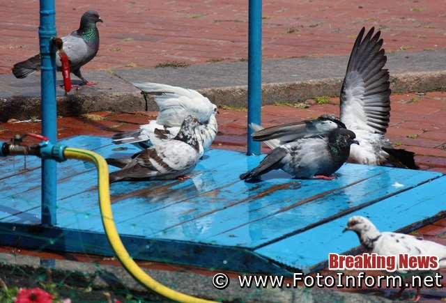 У Кропивницькому встановили розприскувачі води