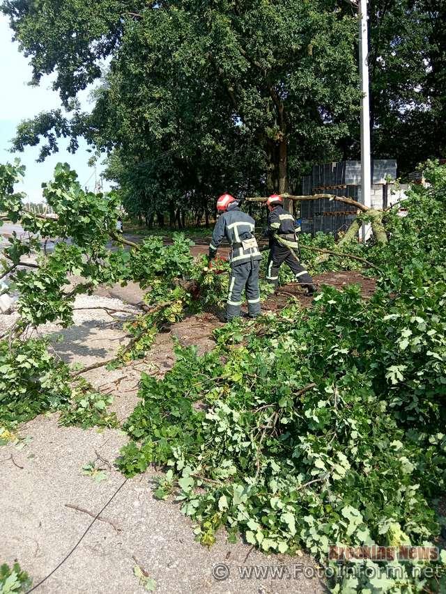 4 липня о 16:06 до Служби порятунку «101» надійшло повідомлення про те, що на вул. Холодноярській м. Кропивницький на проїжджу частину дороги впало дерево, а його гілки - на електродроти та потрібна допомога рятувальників.