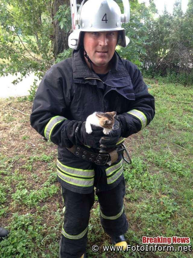 У Кропивницькому з високої тополі рятувальники дістали кошеня
