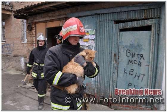 Кропивницький, завершилась рятувальна операція, по визволенню кота з пастки (ФОТО)