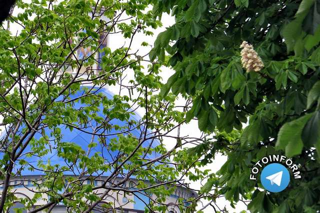 У Кропивницькому гарно розквітли каштани (фоторепортаж) фото игоря филипенко