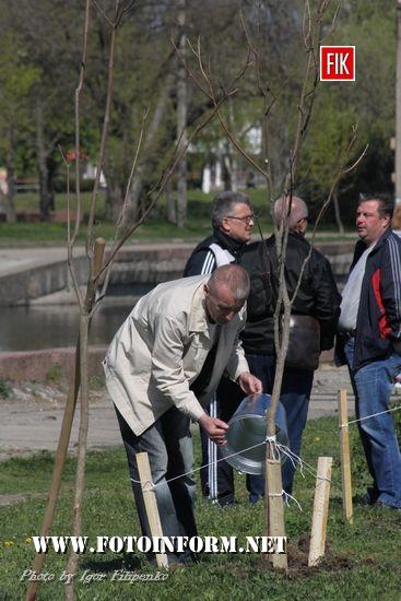 Кропивницький: як саджали дерева на Набережній