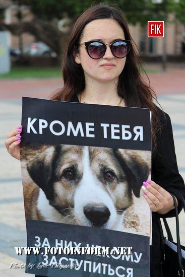 сеукраїнської акції «Україна – не живодерня»