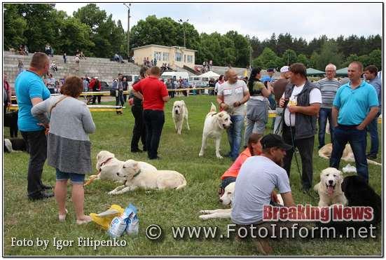 Кропивницький, виставка собак у фотографіях, фото филипенко