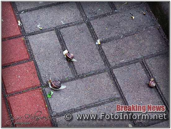Кропивницький, равлики заполонили центр міста, ФОТО филипенко