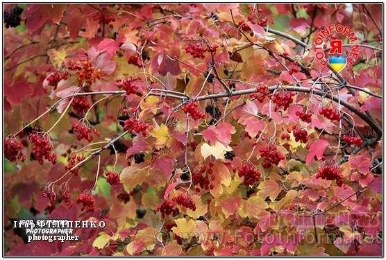 У Кропивницькому розпочалося третє бабине літо, фоторепортаж, фото филипенко, кропивницький новини, осінь у фото Ігоря Філіпенка,