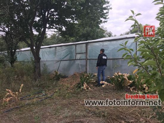 На Кіровоградщині СБУ виявила плантацію марихуани, організовану громадянином РФ (ВІДЕО, ФОТО)