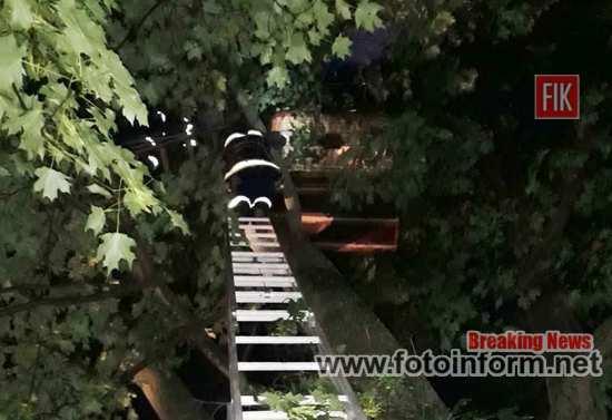 На Кіровоградщині люди на повітряній кулі потрапили у небезпечну ситуацію