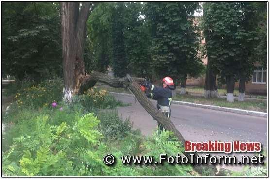 У Кропивницькому, на проїжджу частини дороги, впало дерево