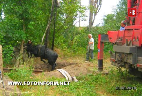 На Кіровоградшині рятувальники витягли з ями корову