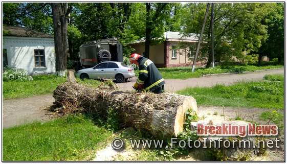 допомогу по прибиранню аварійних дерев