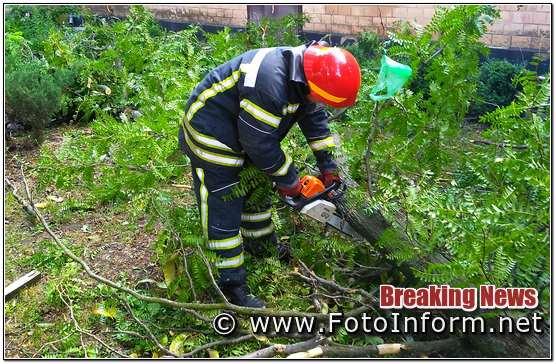 аварійне дерево ледь не впало на житловий будинок