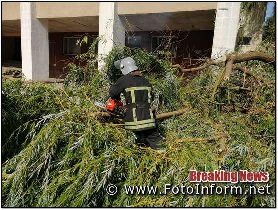 аварійне дерево загрожувало падінням