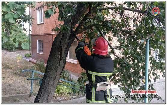 після поривів вітру повалило багато дерев