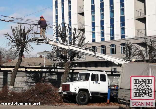 У Кропивницькому взимку обрізають дерева