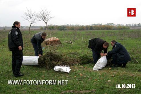 1547 кущів коноплі були висіяні на території колишньої молочнотоварної ферми у селі Диківка.