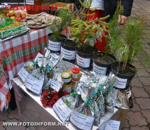 Цього року лісівники Кіровоградщини реалізували новорічних ялинок майже на 1,7 млн. гривень (ФОТО)