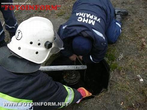 Рятувальники визволили вівчарку, яка впала у люк (ФОТО)