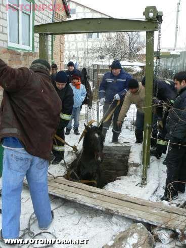 Кіровоград: рятувальники визволили з ями жеребця (фото)