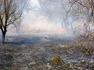 З різким потеплінням виникає все більше випадків загорянь трав'яного настилу. Тільки впродовж однієї доби пожежі виникали в Баришівському, Кагарлицькому, Переяслав-Хмельницькому, Іванківському та Києво-Святошинському районах.