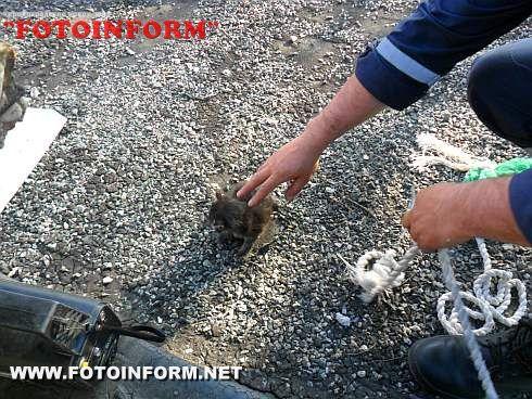 Долинська: Кошеня потрапило у вентиляцію (ФОТО)