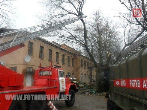 Протягом минулої доби рятувальники Кіровоградщини надавали допомогу по прибиранню дерев, що загрожували падінням через сильні пориви вітру.