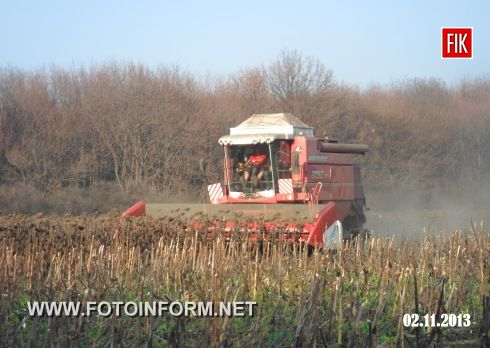 Земля в цьому році порадувала аграріїв гарним врожаєм олійної культури, так, 31 жовтня поточного року, завершено збирання врожаю соняшника: із п'ятдесяти трьох гектарів землі зібрали 77,6 тон насіння.